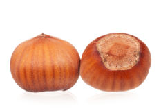 Ripe young filberts Stock Photography
