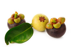 Ripe and young mangosteen  on white Royalty Free Stock Photos