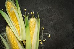 Ripe young sweet corn cob with leaves on black concrete background, copy space.  Royalty Free Stock Photography