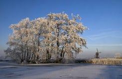 Riped-Bäume nahe Streefkerk Stockbild