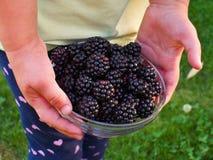 Riped blackberries Royalty Free Stock Photo