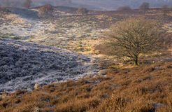 Riped heathland near the Posbank Royalty Free Stock Images