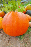 Riped pumpkin Royalty Free Stock Photography