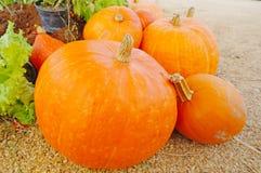 Riped pumpkin Stock Photo
