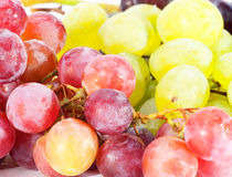 Ripen grapes Stock Photo