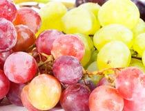 Ripen grapes Stock Photo