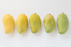 Ripen mango form green to yellow isolated on white background. Royalty Free Stock Photos