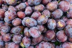 Ripen purple plums Stock Images