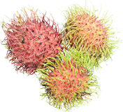 Ripen rambutan fruits Stock Images