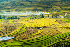 Ripen rice terraces in the afternoon sunlights Royalty Free Stock Photo