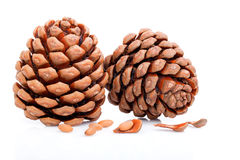 Ripened cone with pine nuts. On white background Royalty Free Stock Photos