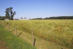 Ripened Summer Grassland Stock Image