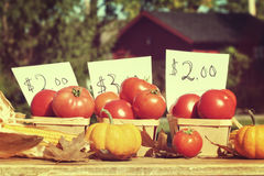 Ripened tomatoes for sale at roadside stand Royalty Free Stock Photos