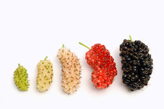 Ripening berries. The growth cycle of berries on white background Royalty Free Stock Photos