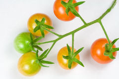 Ripening Cherry Tomatoes Stock Images