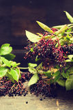 Ripening elderberries bunch on rustic table over dark wooden background Stock Photography