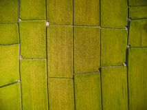 Aerial View of Paddy Field royalty free stock photos