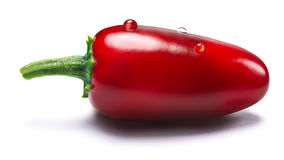 Ripening red Jalapeno, paths. Ripening red Jalapeno pepper. Clipping paths, shadows separated, infinite depth of field Royalty Free Stock Images