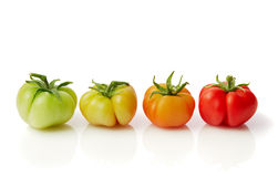 Ripening stages of the tomato royalty free stock images
