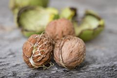 Ripening walnuts in shell. Fruit ready for harvesting on a wooden table. royalty free stock photography