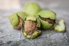 Ripening walnuts in shell. Fruit ready for harvesting on a wooden table. stock photo