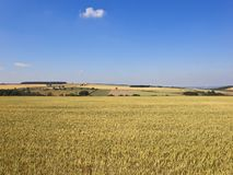 Ripening wheat fields in a patchwork farming landscape stock photography