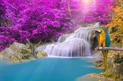 Ripeti meccanicamente l'ara contro la cascata tropicale in foresta profonda Fotografia Stock
