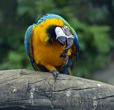 Ripeti meccanicamente l'uccello Fotografia Stock