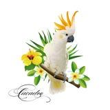 Ripeti meccanicamente la cacatua sui rami tropicali con le foglie ed i fiori su fondo bianco Immagini Stock