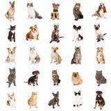 Ripetizione del modello dei gatti e dei cani Immagine Stock Libera da Diritti