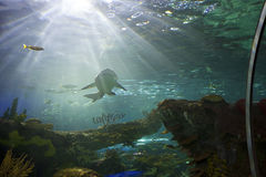 Ripleys akvarium i toronto Arkivfoton