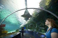 Ripleys akvarium i toronto Fotografering för Bildbyråer