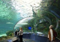 Ripleys akvarium i toronto Arkivbild