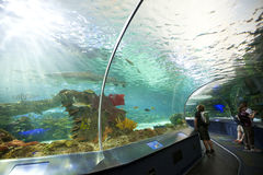 Ripleys akvarium i toronto Arkivbilder