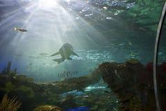 Ripleys-Aquarium in Toronto Stockfotos