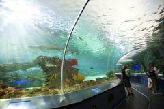 Ripleys-Aquarium in Toronto Stockbilder