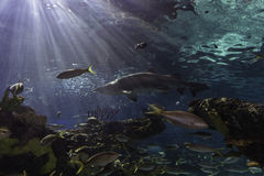 Ripleys' Aquarium - Toronto, Ontario Stock Image