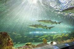 Ripleys aquarium in toronto Royalty Free Stock Photography