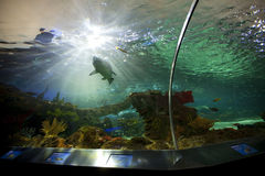 Ripleys aquarium in toronto Royalty Free Stock Photo