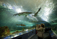 Ripleys aquarium in toronto stock photography
