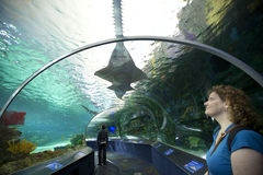 Ripleys aquarium in toronto Stock Image