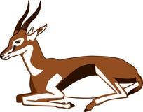 Riposarsi della gazzella di Thompson Immagine Stock Libera da Diritti