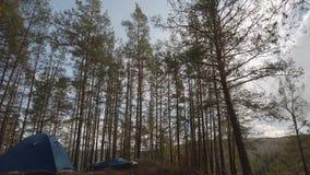 Riposi in un'area della foresta della montagna in natura alla notte dalla luce della luna timelapse nel legno con una tenda stock footage