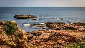 Riposo dei gabbiani e dei cormorani fotografie stock