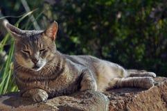 Riposo del gatto Fotografia Stock Libera da Diritti