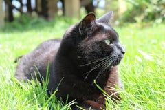 Riposo del gatto nero Fotografie Stock