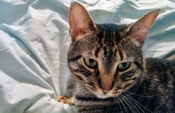 Riposo di Kitty Fotografia Stock Libera da Diritti