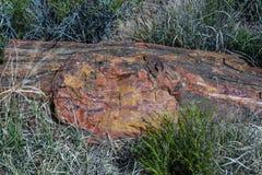 Riposo di legno petrificato nel deserto Fotografia Stock Libera da Diritti