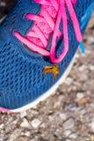Riposo giallo della farfalla sull'scarpe Fotografia Stock Libera da Diritti