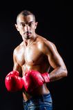 The ripped boxer in sports concept Stock Photos